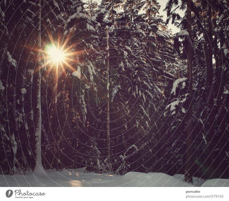 midwinter Himmel Natur Sonne Landschaft Winter Wald Gefühle Feste & Feiern Stimmung Schneefall Kultur Zeichen Hoffnung Spiritualität