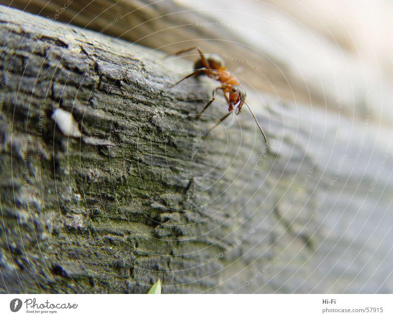 Ameise bei der Arbeit Natur Holz Baumstamm Waldameise