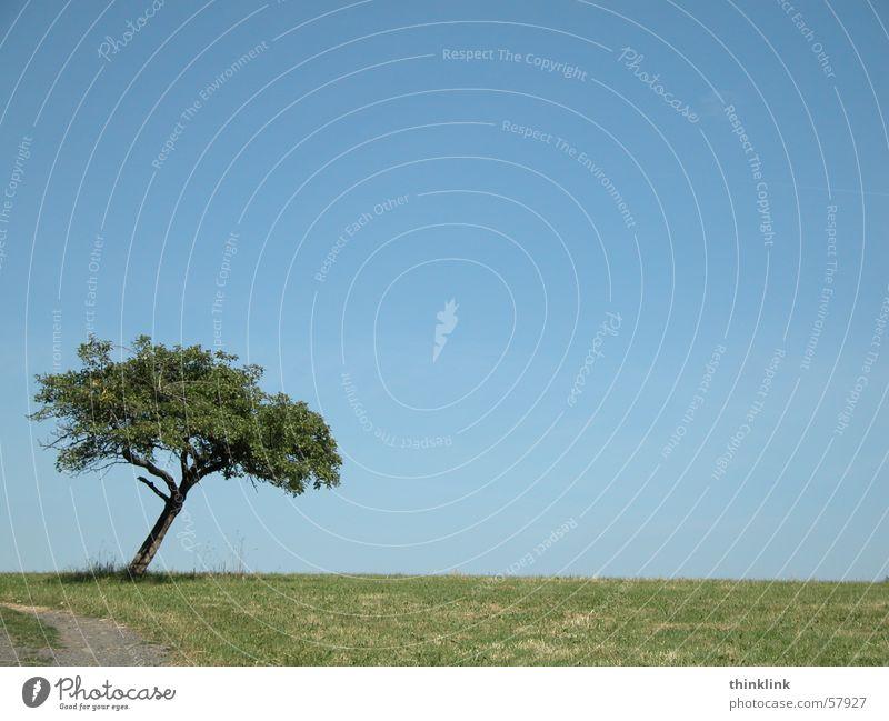Ausweichmanöver Baum Landschaft Wege & Pfade Kurve Himmel