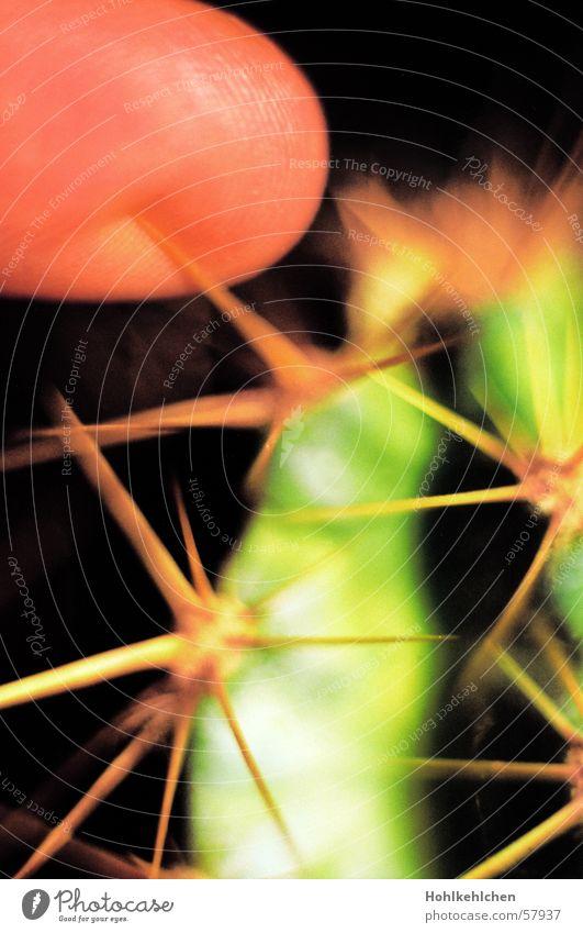 und der sticht, sticht, sticht Pflanze Kaktus grün stechen Finger Makroaufnahme Schmerz Spitze
