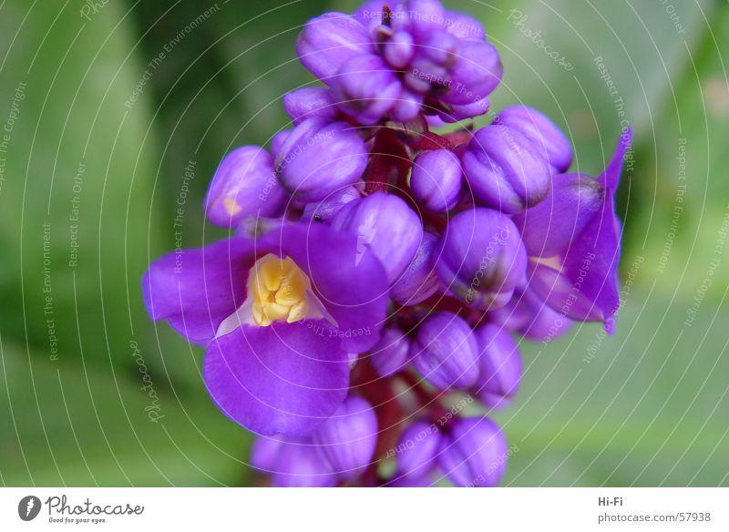Blüte Natur Blume Pflanze Blatt Wiese Gras violett