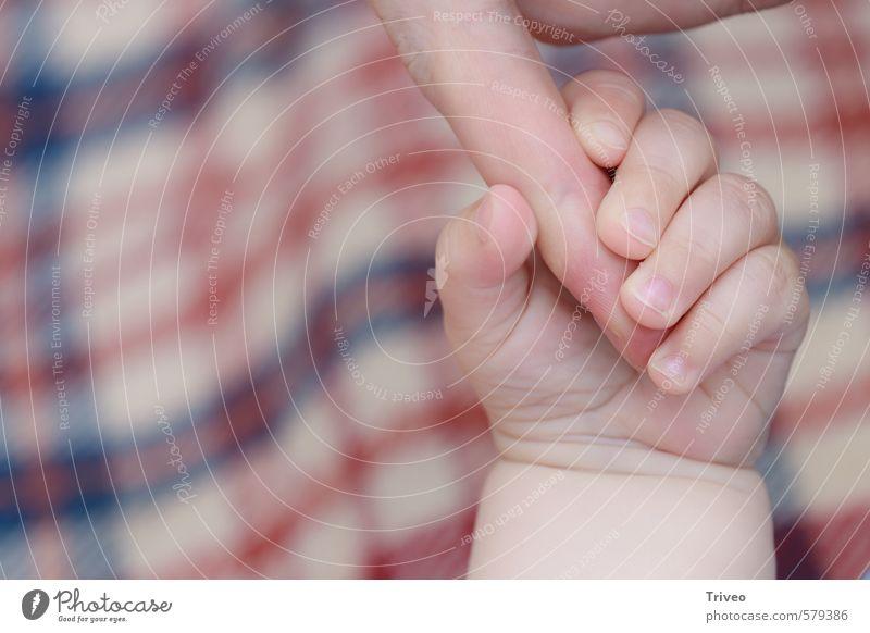 kleiner Finger greift ganze Hand 2 Mensch 0-12 Monate Baby Vertrauen Kindheit Instinkt Nachkommen Eltern Farbfoto Innenaufnahme Zentralperspektive