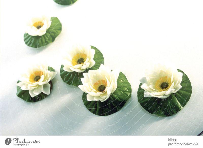 seerosen weiß Blume gestellt Wasserpflanze Seerosen Kunstblume Stoffblüten
