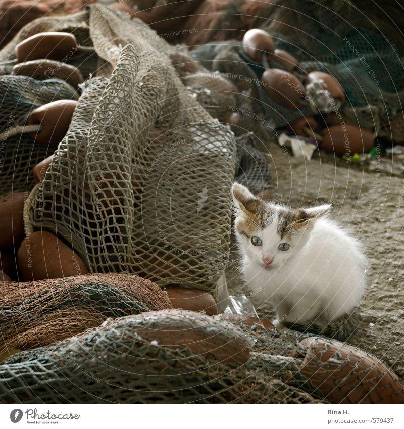Fisherman's Friend IV Katze Tier Tierjunges Angst sitzen warten beobachten niedlich Quadrat Schüchternheit Fischernetz