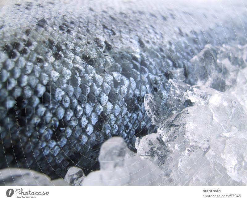 fish & ice Ernährung Eis Fisch Scheune Lachs