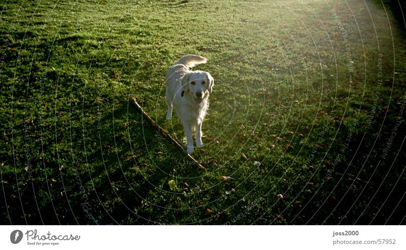 """mein Hund """"Peach"""" Wiese"""