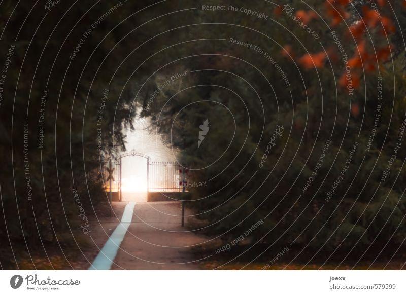 Wächter des Lichts grün weiß rot ruhig Ferne schwarz Herbst Wege & Pfade Religion & Glaube Park Idylle Nebel Ewigkeit Hoffnung geheimnisvoll