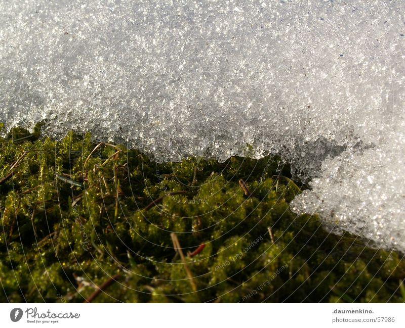 versus Wiese grün weiß kalt nass Frühling Winter Schnee Rasen Wassertropfen Makroaufnahme