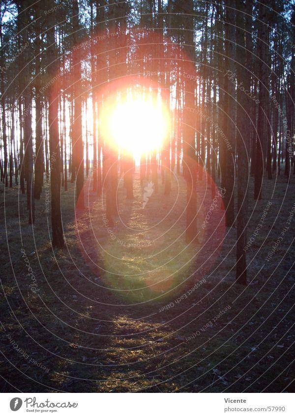 Korona Himmel Baum Sonne blau Wald Wiese Gras orange Kreis Baumkrone Kiefer Unterholz Nadelwald Lausitz