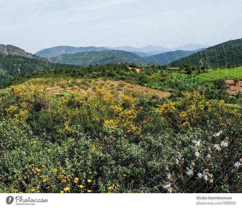 Sardischer Frühlingsbeginn Ferien & Urlaub & Reisen Tourismus Berge u. Gebirge wandern Umwelt Natur Landschaft Pflanze Baum Blume Sträucher Grünpflanze