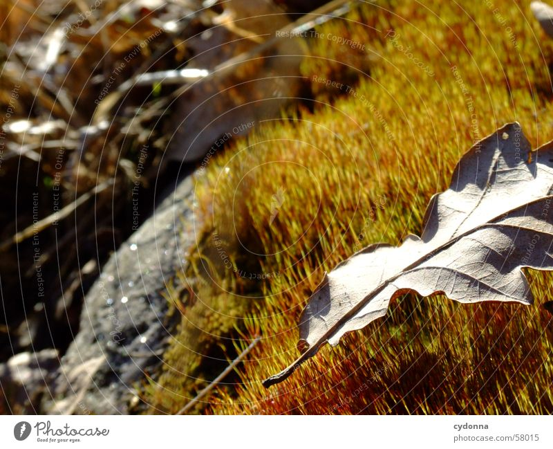 Moosteppich I Pflanze Blatt Herbst Licht Makroaufnahme Nahaufnahme moss Sonne Maserung Detailaufnahme Stein Natur