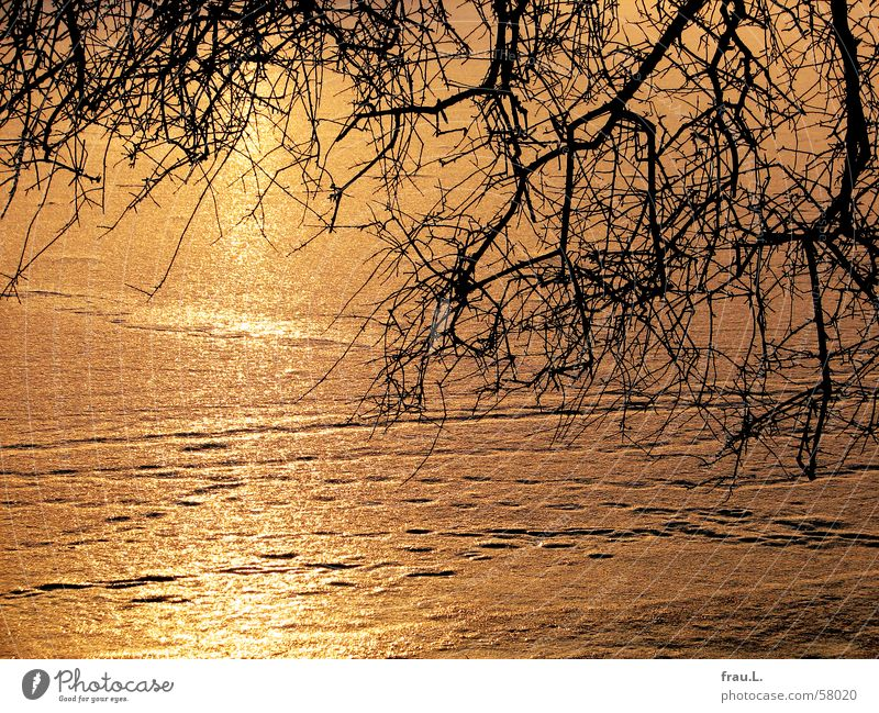 Eis-Alster gefroren Baum Sonnenuntergang Winter kalt Fußspur Abend Ast Fluss Spuren