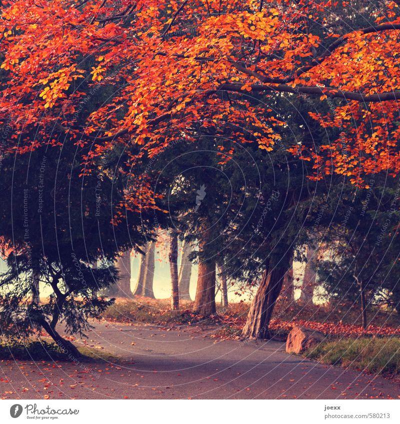 Feuer Herbst Wetter Nebel Baum Park Wege & Pfade alt groß kalt braun grün orange rot Romantik Vorsicht ruhig Idylle Farbfoto Außenaufnahme Menschenleer Tag