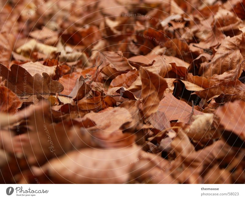 laub Blatt braun Herbst Trauer Bodenbelag ruhig brown Tod alt mögen welk