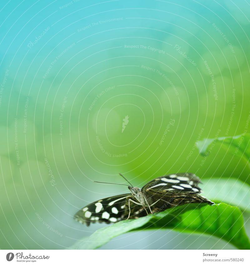 Traumstart Natur Pflanze Tier Blatt Grünpflanze Schmetterling 1 sitzen warten frei klein grün türkis Gefühle Stimmung Glück Fröhlichkeit Lebensfreude