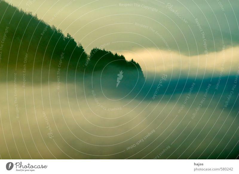 Hochnebel im Winter Natur Landschaft Herbst Wetter Nebel Baum Wald gigantisch blau grau weiß Dunst Nebelbank feucht Hochebene Sicht null mystisch