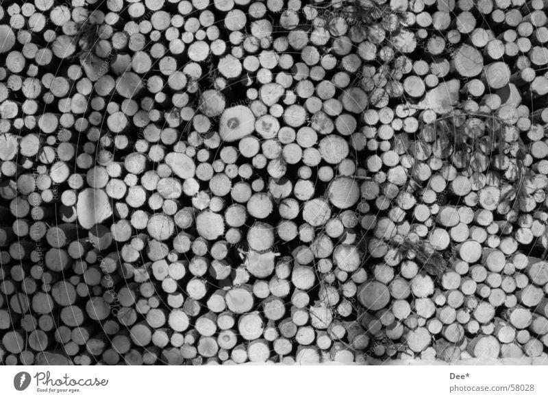 Holzwurm Baumstamm Blatt schwarz weiß Natur Spaziergang Schatten Schwarzweißfoto nicht farbig Sonne Ast