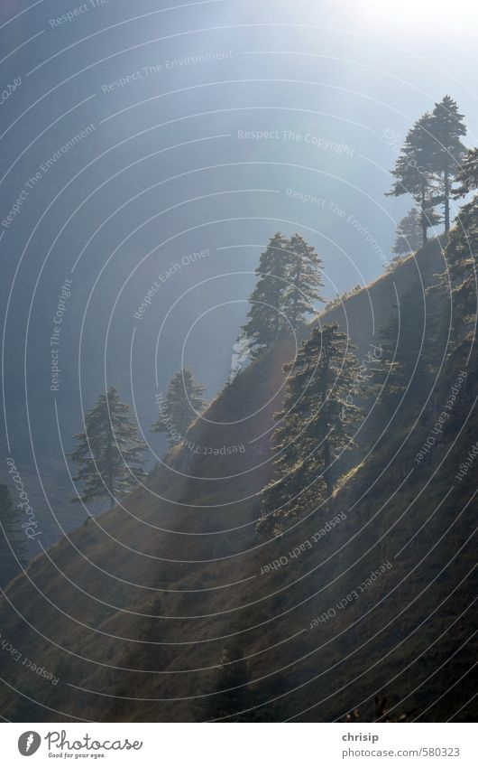 voll im Licht Umwelt Natur Landschaft Sonne Sonnenlicht Nebel Pflanze Baum Gras Wald Hügel leuchten Farbfoto Außenaufnahme Menschenleer Schatten