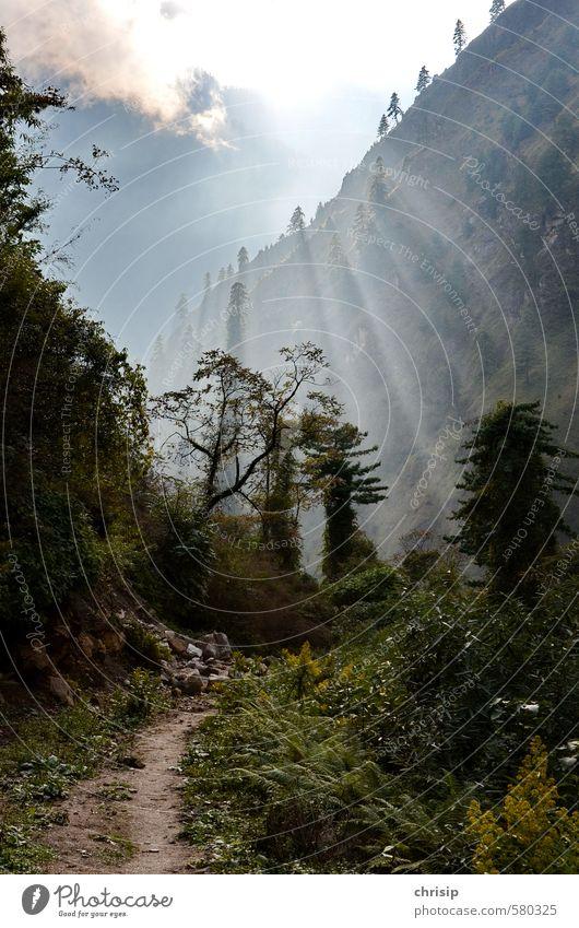 Weg zum Licht Himmel Natur grün Sonne Baum Landschaft Wolken Wald Umwelt Wege & Pfade Gras Freizeit & Hobby Nebel leuchten Sträucher wandern