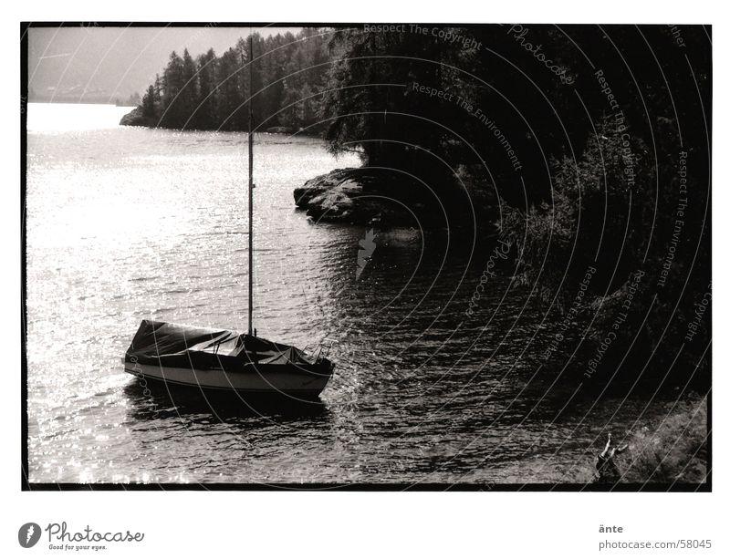am Silsersee See Engadin Schweiz Wasserfahrzeug Segelboot Wellen Wald Baum Tanne Reflexion & Spiegelung Licht Physik Stimmung Sommer Herbst Schwarzweißfoto