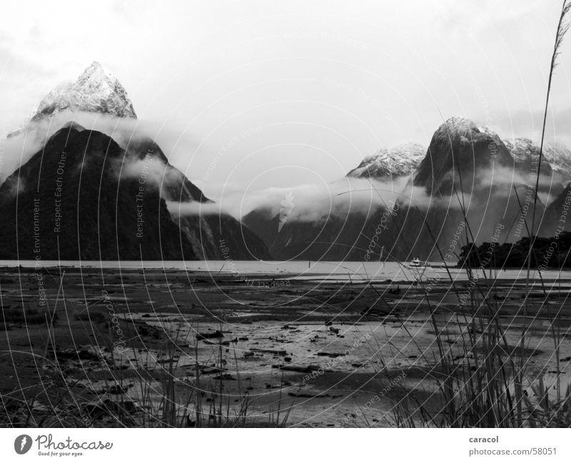 Mitre Peak Meer Schilfrohr Wolken Natur Neuseeland Landschaft landscape Berge u. Gebirge mountain mountains snow Schnee Fjord Klang sea ocean water Wasser cloud