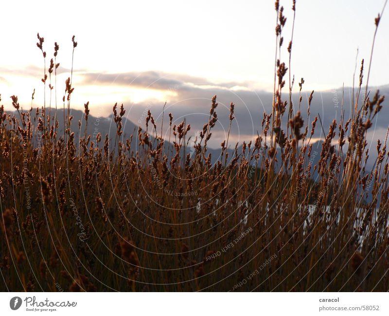 Abendstimmung Sonnenuntergang Feld Stroh Gras Wolken Berge u. Gebirge