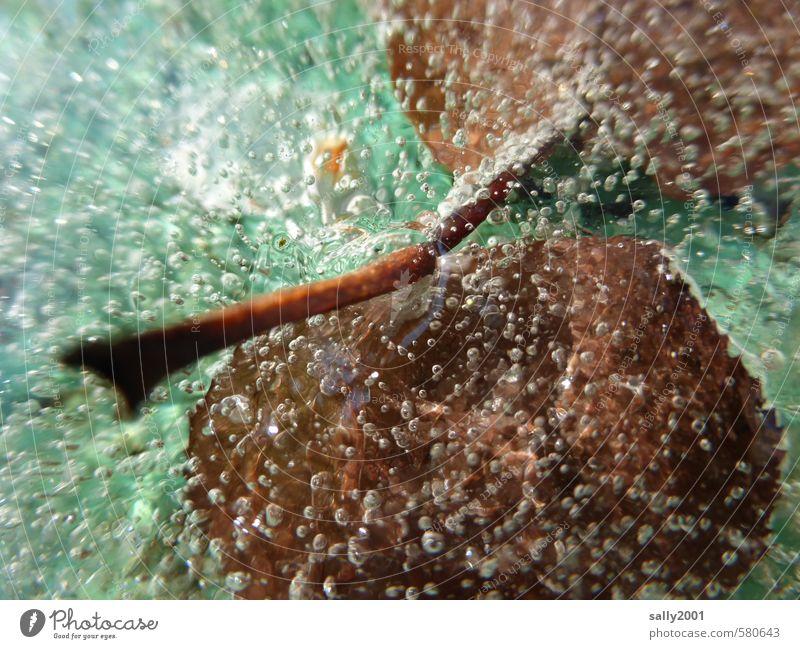 Eisgeblubber Natur grün Wasser Blatt Winter kalt außergewöhnlich braun Luft frisch Energie Urelemente Vergänglichkeit Coolness Wandel & Veränderung