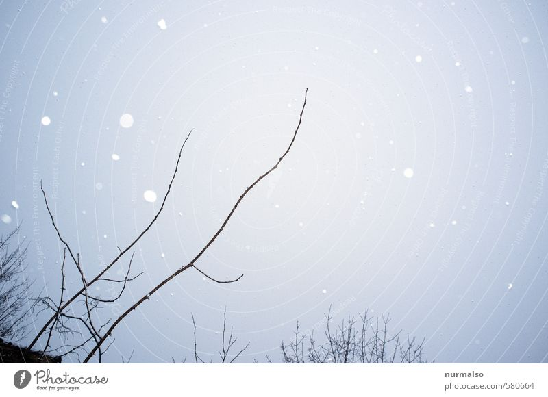 schneepicker Häusliches Leben Kunst Umwelt Natur Winter Klima schlechtes Wetter Eis Frost Schnee Schneefall Pflanze Sträucher Park Erholung fallen glänzend kalt