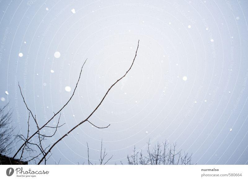 schneepicker Natur Pflanze Erholung Winter kalt Umwelt Traurigkeit Schnee Kunst Stimmung Schneefall träumen Park glänzend Häusliches Leben Eis
