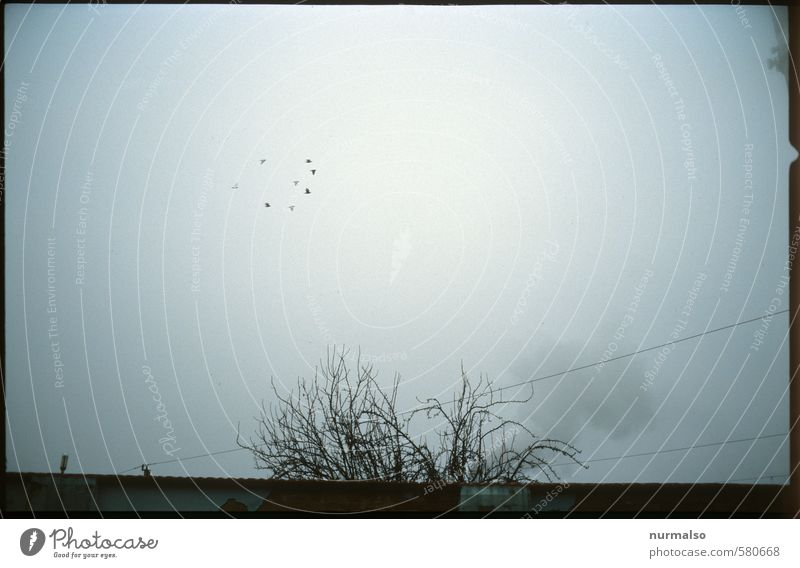 Birds in the Fogg Himmel Natur dunkel Umwelt Traurigkeit Herbst Kunst Stimmung Vogel fliegen Nebel trist Klima gruselig entdecken trashig