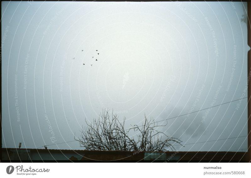 Birds in the Fogg Kunst Umwelt Natur Himmel Herbst schlechtes Wetter Nebel Industrieanlage Vogel Schwarm entdecken fliegen frieren dunkel gruselig trashig trist
