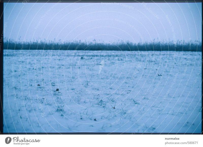 trauriger Horizont Jagd Winter Schnee Winterurlaub wandern Kunst Natur Landschaft schlechtes Wetter Eis Frost Schneefall Gras Wiese beobachten Erholung frieren