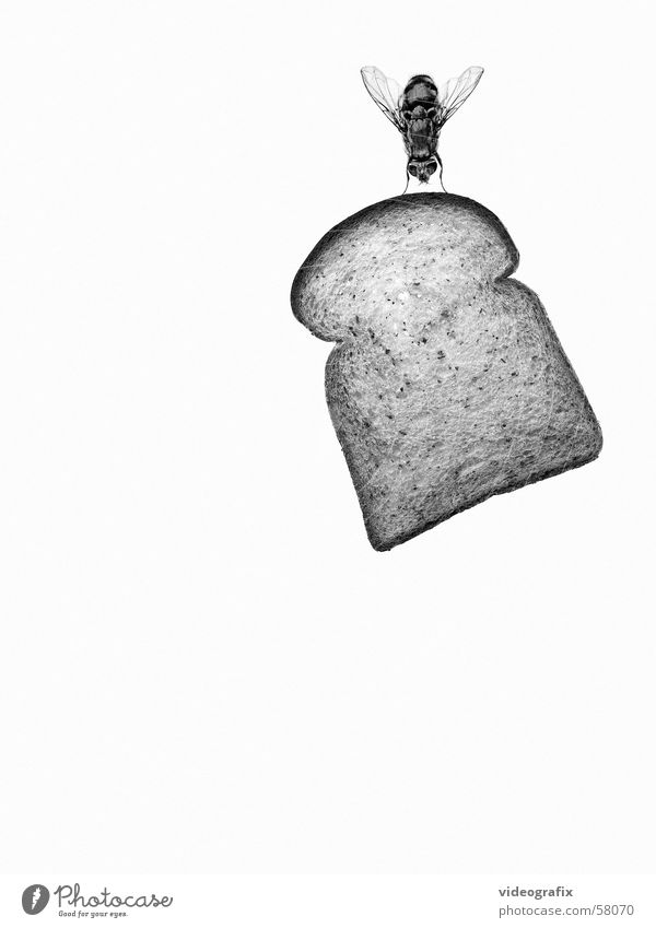 take my bread away Ernährung Informationstechnologie Kennwort