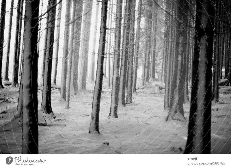 weiss auf schwarz Natur weiß Baum Landschaft Winter schwarz Wald dunkel kalt Umwelt Schnee bedrohlich gruselig schlechtes Wetter