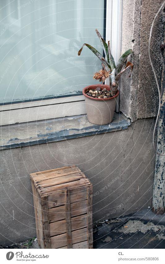 ut pascha | schöner wär's, wenn's schöner wär Pflanze Blume Topfpflanze Menschenleer Haus Mauer Wand Fenster dreckig hässlich kaputt trist grau Fernweh