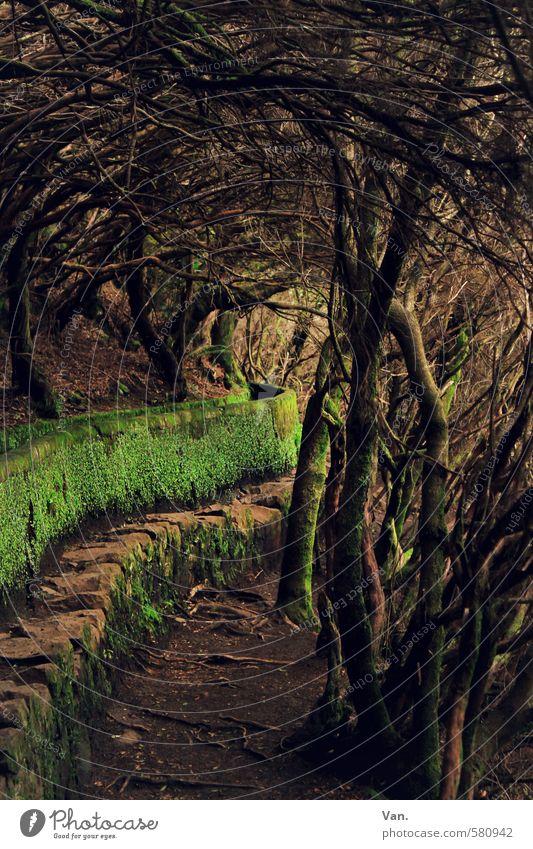*300* Verbo(r)gene Pfade Natur Pflanze Erde Herbst Baum Moos Wald Wege & Pfade grün mystisch geschlossen Kanal Levada Farbfoto Gedeckte Farben Außenaufnahme