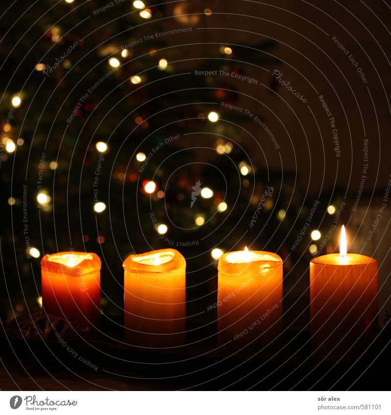 vier Feste & Feiern Weihnachten & Advent Dekoration & Verzierung Kerze Adventskranz Lichterkette orange Gefühle Stimmung Zufriedenheit Vorfreude Zusammensein