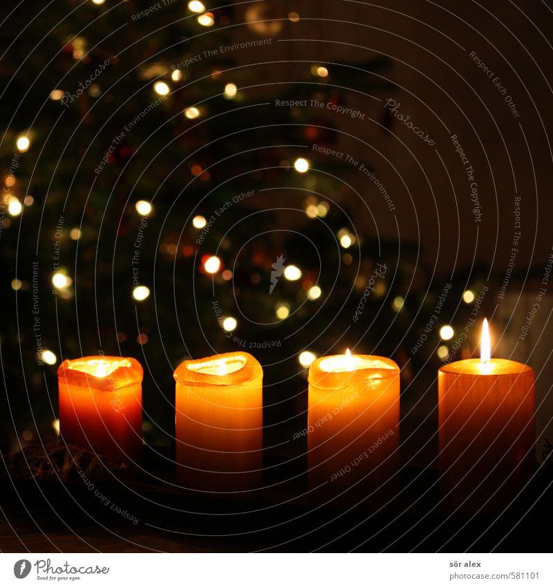 vier Weihnachten & Advent Gefühle Feste & Feiern Stimmung Zusammensein orange Zufriedenheit Dekoration & Verzierung Kitsch Kerze Weihnachtsbaum Handel Tradition brennen Vorfreude Weihnachtsdekoration