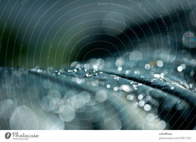 Perlenteppich Pflanze Blatt Park Urwald nass Traurigkeit Trauer Tod Wassertropfen Wasserdampf Tropfen tropfend Nanotechnologie Schwache Tiefenschärfe