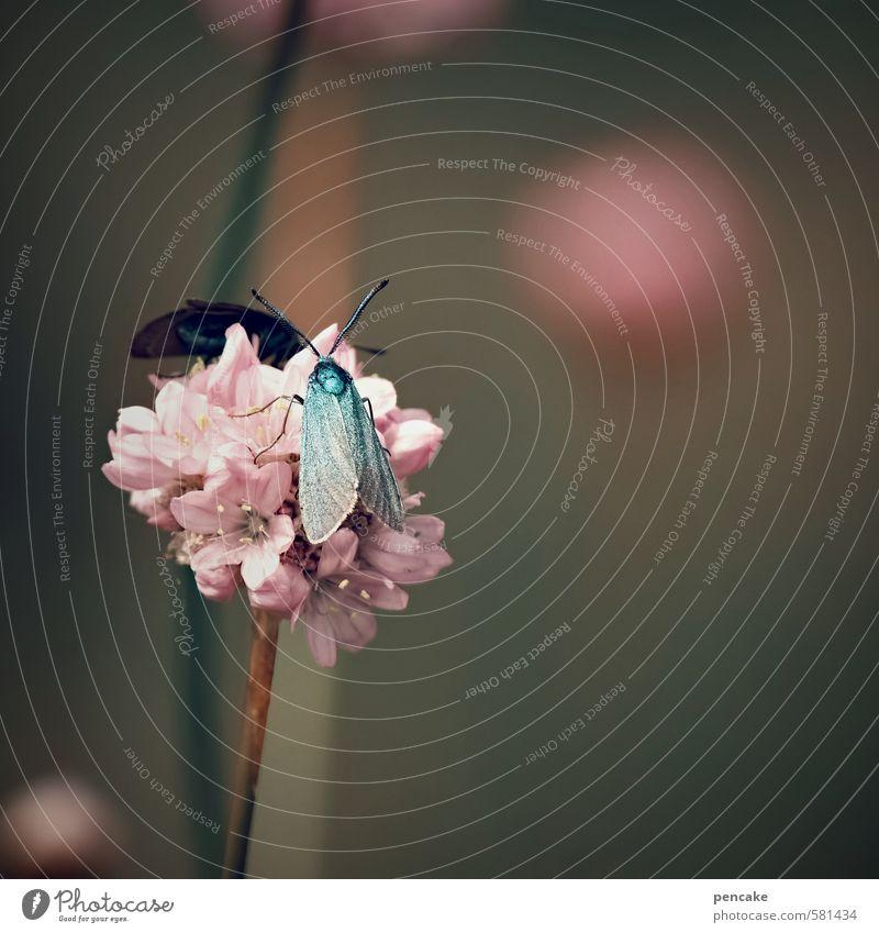 im zeichen des widders Natur Pflanze Tier Sommer Blume Wiese Schmetterling Flügel Zeichen ästhetisch exotisch verrückt schön rosa türkis Widderchen Weltall