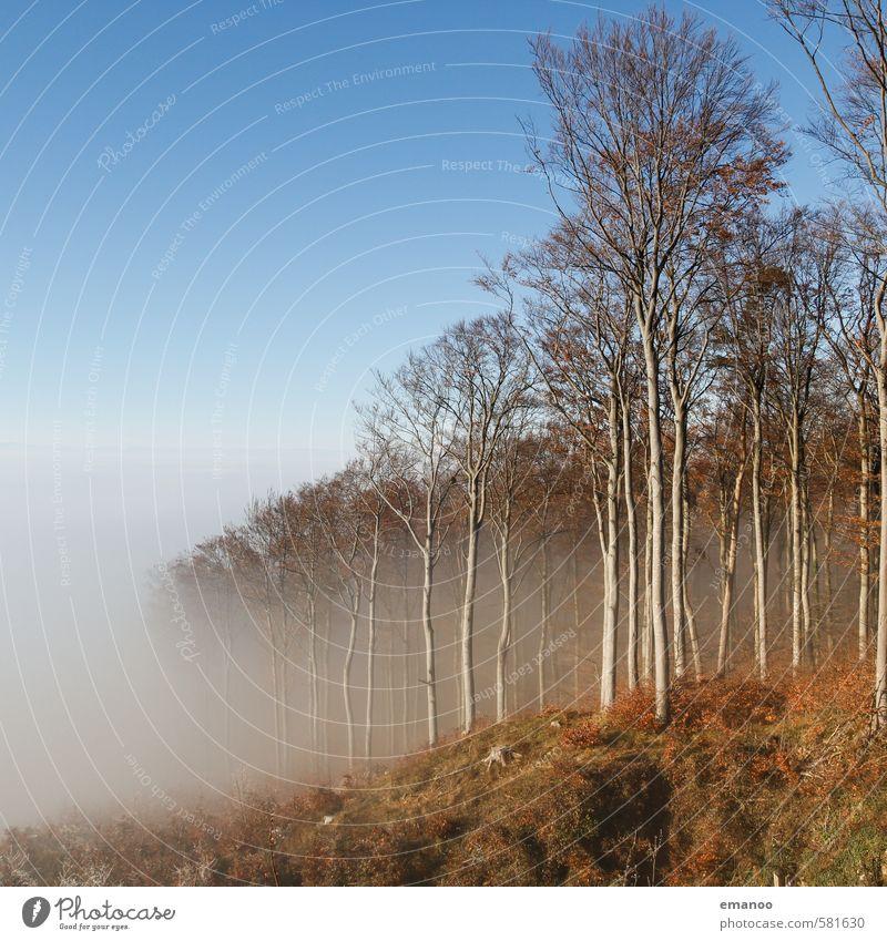 Waldnebel Ausflug Berge u. Gebirge wandern Natur Landschaft Luft Wasser Himmel Wolken Winter Klima Wetter Nebel Pflanze Baum Hügel Gipfel hoch blau Nebelwald
