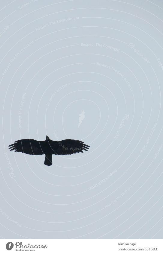 vogelfrei Himmel Natur blau Ferne Umwelt Freiheit Luft fliegen Adler