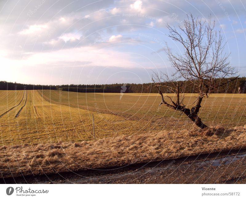 Feldversuch Gegend Baum Wald Wolken Licht Fußweg Landwirtschaft Horizont gepflügt Muster Einsamkeit Dämmerung Zaun Hochsitz Hügel Landschaft Himmel Sonne