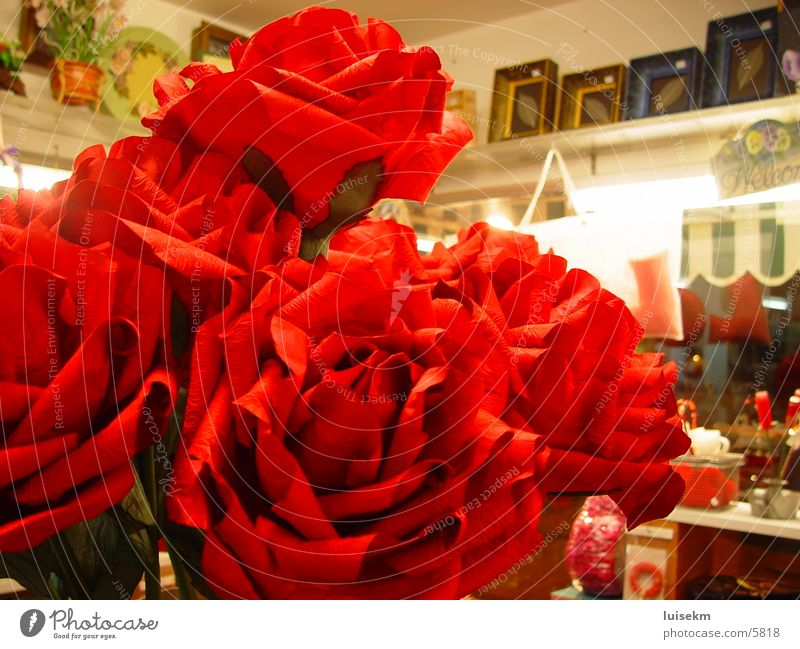 red rose Dinge