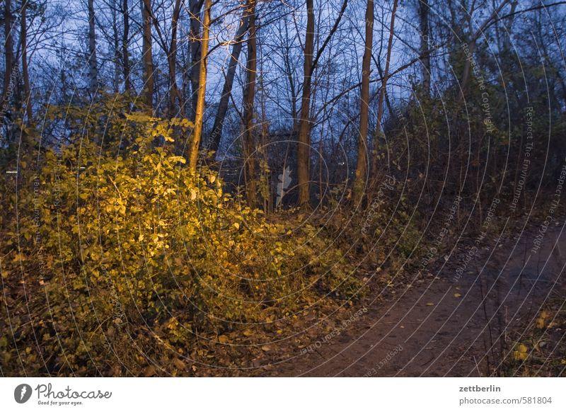 Busch im Dunkeln Abend Urwald dunkel geheimnisvoll Herbst Natur Naturschutzgebiet Wildpark Umweltschutz November Park Schöneberg Wald wallroth Winter Sträucher
