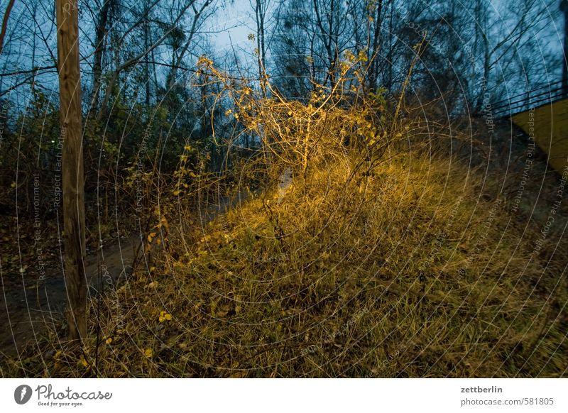 PC-Treffen Abend Urwald dunkel geheimnisvoll Herbst Natur Naturschutzgebiet Wildpark Umweltschutz November Park Schöneberg Wald wallroth Winter Sträucher