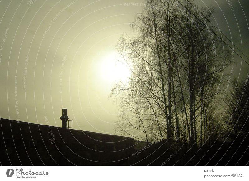 Verschlungen! Morgen trist Baum Geäst sihouette Sonne matt sunrise