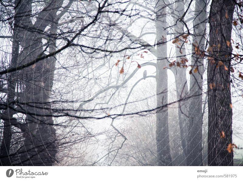 einsam Umwelt Natur Landschaft Herbst schlechtes Wetter Unwetter Nebel Pflanze Baum Wald bedrohlich dunkel kalt Ast gruselig Farbfoto Gedeckte Farben
