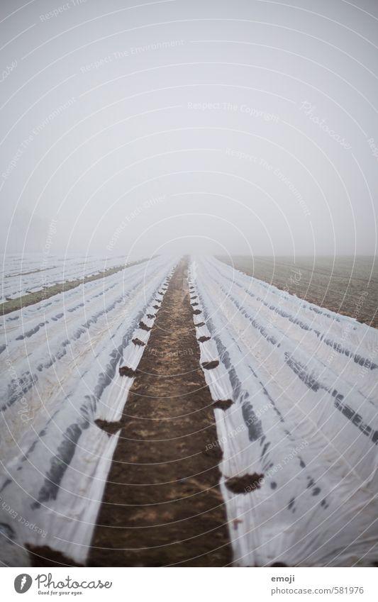 karg Umwelt Natur Landschaft Winter schlechtes Wetter Nebel Feld gruselig kalt trist grau Farbfoto Gedeckte Farben Außenaufnahme Menschenleer Textfreiraum oben