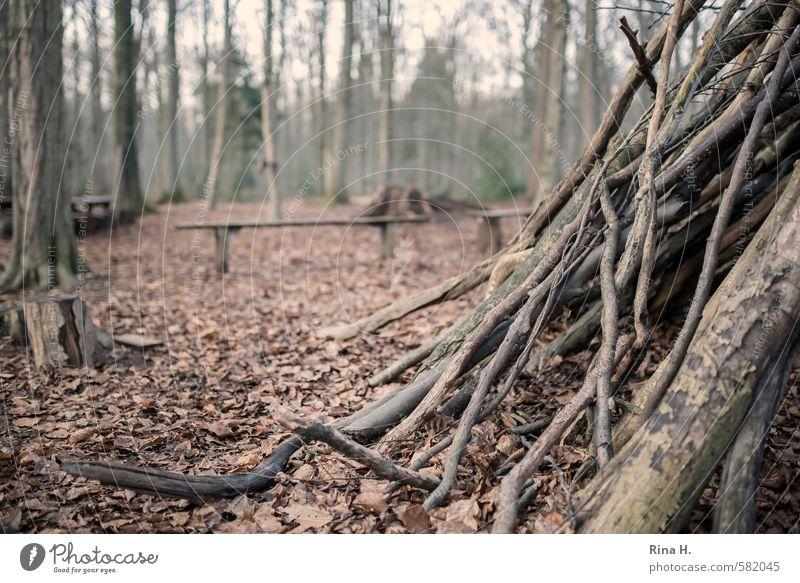 SpielWiese Umwelt Natur Landschaft Winter Baum Wald authentisch Freude Lebensfreude ruhig Idylle Zweige u. Äste Holzbrett Spielwiese Baumstumpf Blatt Laubwald